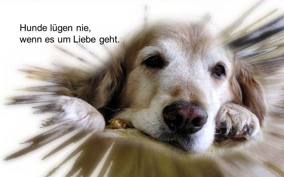 Hunde lügen nie, wenn es um Liebe geht.