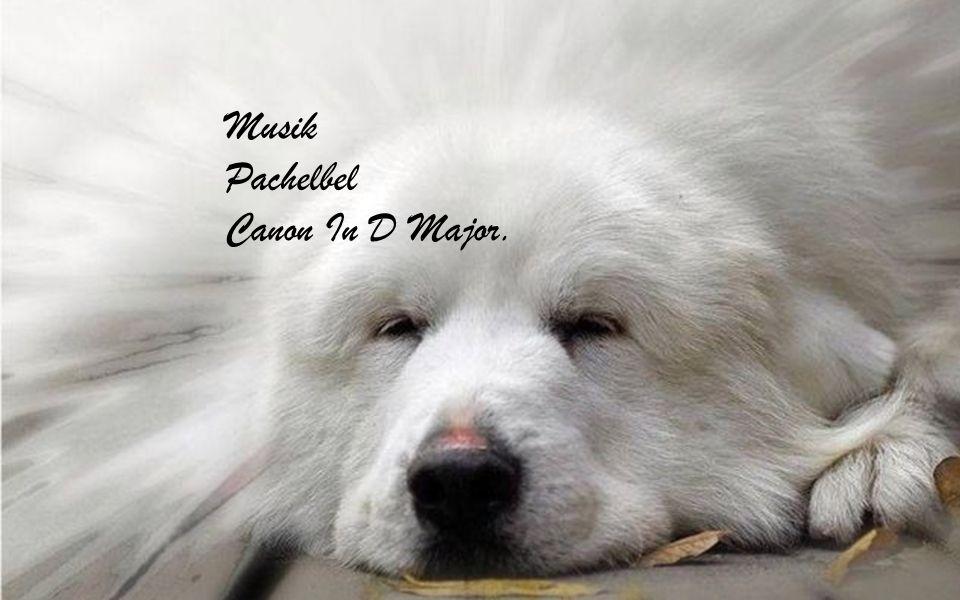 Musik Pachelbel Canon In D Major.