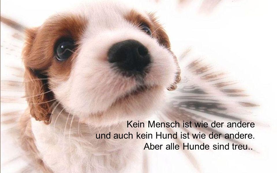 Kein Mensch ist wie der andere und auch kein Hund ist wie der andere. Aber alle Hunde sind treu..