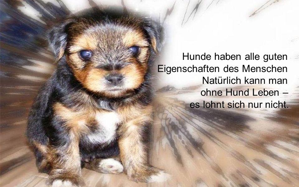 Hunde haben alle guten Eigenschaften des Menschen Natürlich kann man ohne Hund Leben – es lohnt sich nur nicht.