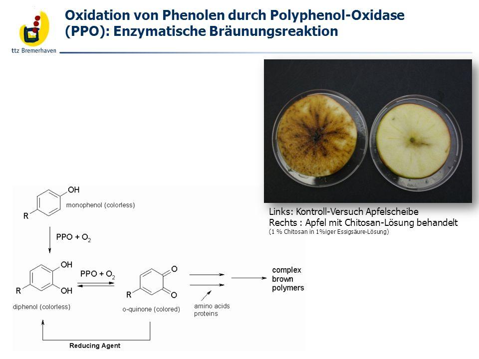 Bäckerei- und Getreidetechnologie Enzymatische Bräunungsreaktion: Melanosis –Verlauf bei Shrimps (Courtesy of Dr.
