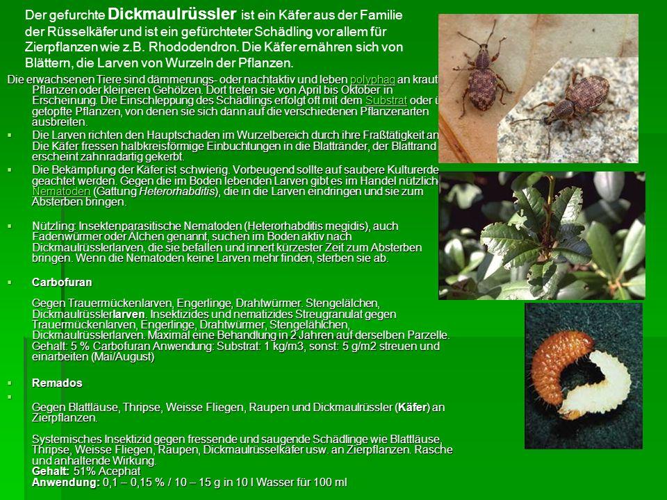 Pflanzenschutz Unkrautbekämpfung