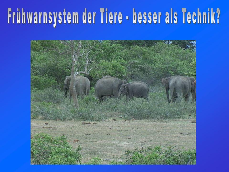 Tiere als natürliches Frühwarnsystem.