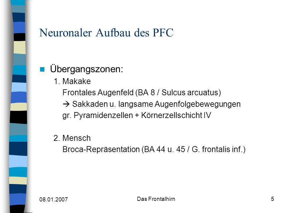 08.01.2007 Das Frontalhirn6 Neuronaler Aufbau des PFC Neuronale Verbindungen des PFC ( reziprok) –Thalamus: N.