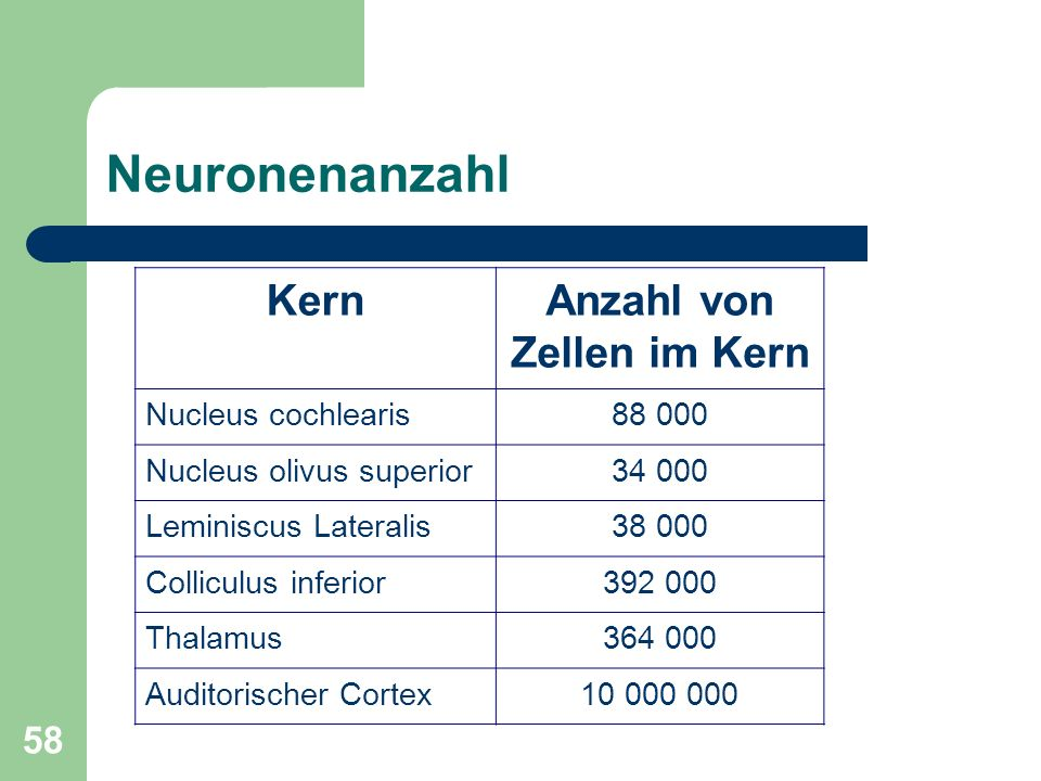 58 Neuronenanzahl KernAnzahl von Zellen im Kern Nucleus cochlearis88 000 Nucleus olivus superior34 000 Leminiscus Lateralis38 000 Colliculus inferior392 000 Thalamus364 000 Auditorischer Cortex10 000 000