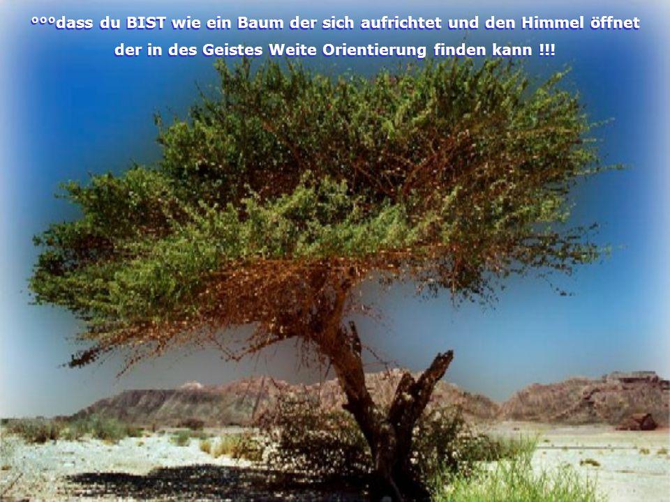 °°°dass du BIST wie ein Baum der sich aufrichtet und den Himmel öffnet der in des Geistes Weite Orientierung finden kann !!.