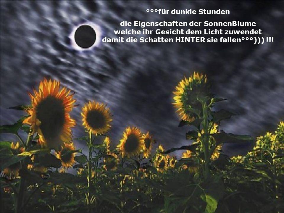 °°°für dunkle Stunden die Eigenschaften der SonnenBlume welche ihr Gesicht dem Licht zuwendet damit die Schatten HINTER sie fallen°°°))) !!!
