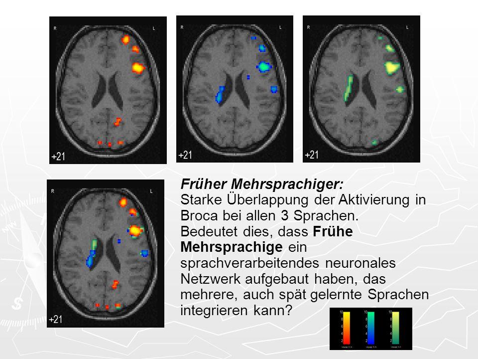 Je nach frühkindlicher Sprachexposition wird ein unterschiedliches Sprachprozessierungssystem aufgebaut Frühe Mehrsprachige benutzen ein ausgedehntes frontales und präfrontales Netzwerk unter Einschluss des Broca-Areals.
