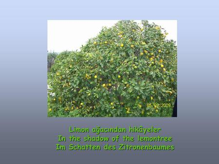 Limon ağacından hikâyeler In the shadow of the lemontree Im Schatten des Zitronenbaumes.