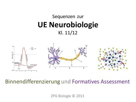 Sequenzen zur UE Neurobiologie Kl. 11/12