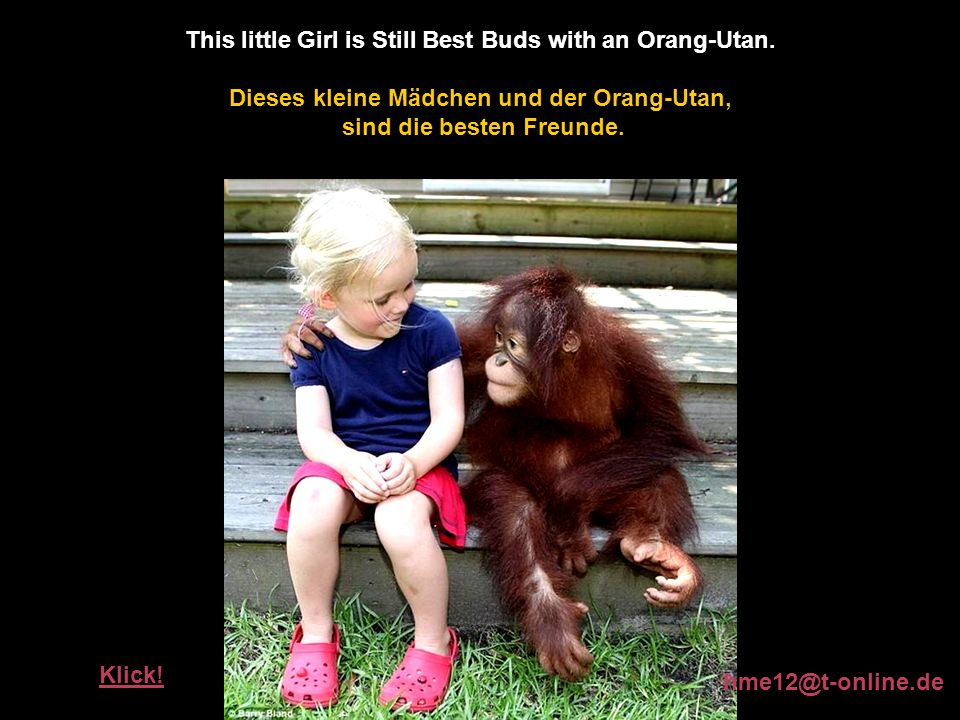 This little Girl is Still Best Buds with an Orang-Utan.