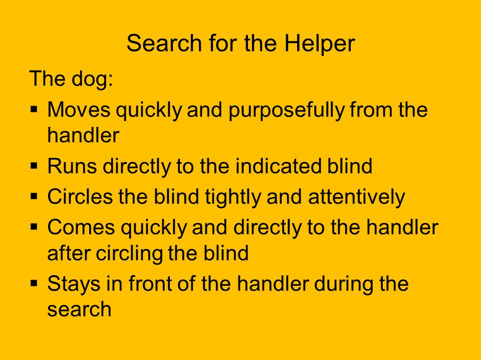 Search for the Helper The dog: