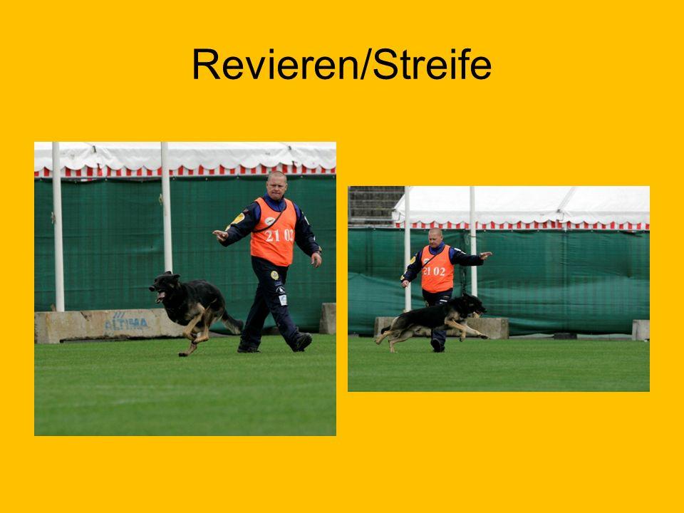 Revieren/Streife