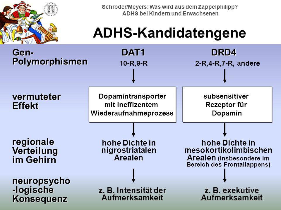 ADHS-Kandidatengene DAT1 DRD4 Gen-Polymorphismen vermuteter Effekt