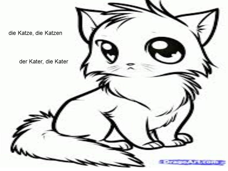 die Katze, die Katzen der Kater, die Kater