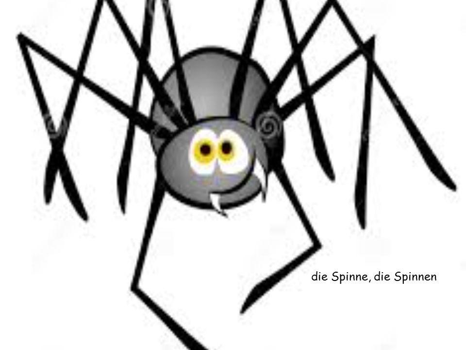 die Spinne, die Spinnen