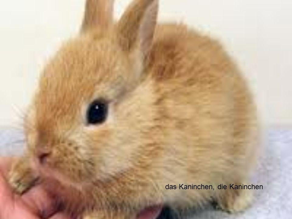 das Kaninchen, die Kaninchen