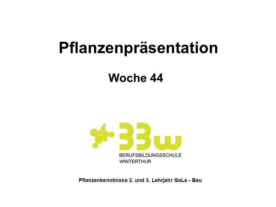 Pflanzenpräsentation Pflanzenkenntnisse 2. und 3. Lehrjahr GaLa - Bau
