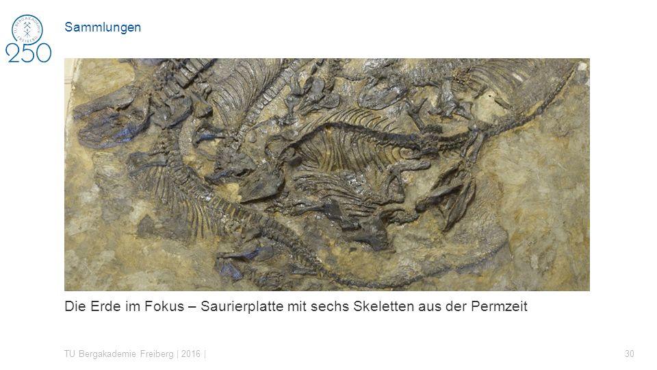Die Erde im Fokus – Saurierplatte mit sechs Skeletten aus der Permzeit