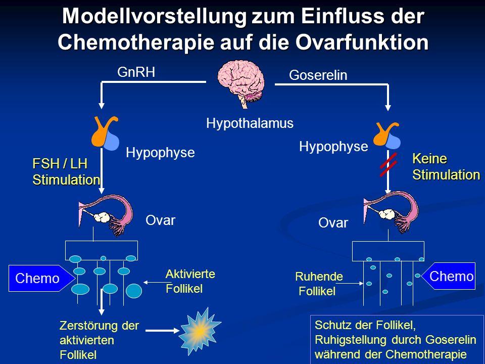 Modellvorstellung zum Einfluss der Chemotherapie auf die Ovarfunktion