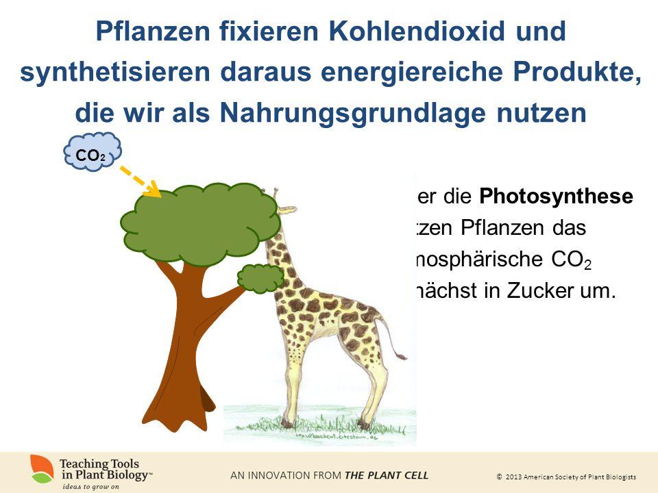 Pflanzen fixieren Kohlendioxid und