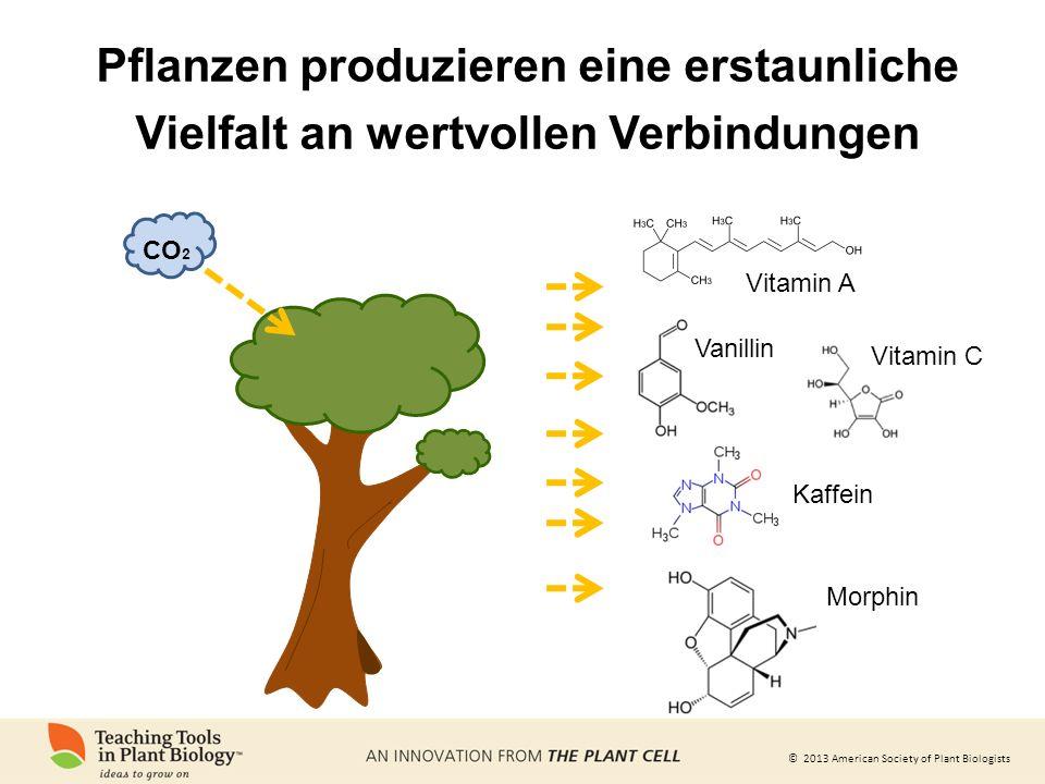 Pflanzen produzieren eine erstaunliche Vielfalt an wertvollen Verbindungen