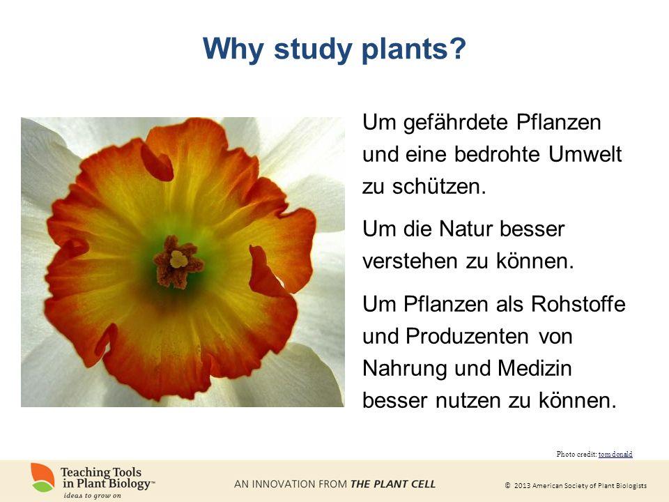 Why study plants Um gefährdete Pflanzen und eine bedrohte Umwelt zu schützen. Um die Natur besser verstehen zu können.