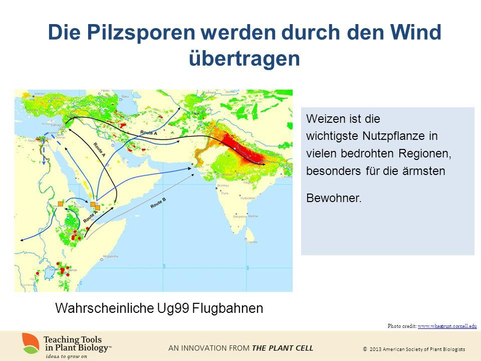 Die Pilzsporen werden durch den Wind übertragen