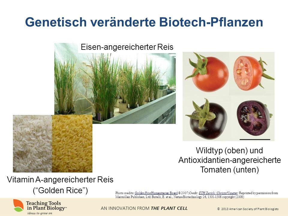 Genetisch veränderte Biotech-Pflanzen