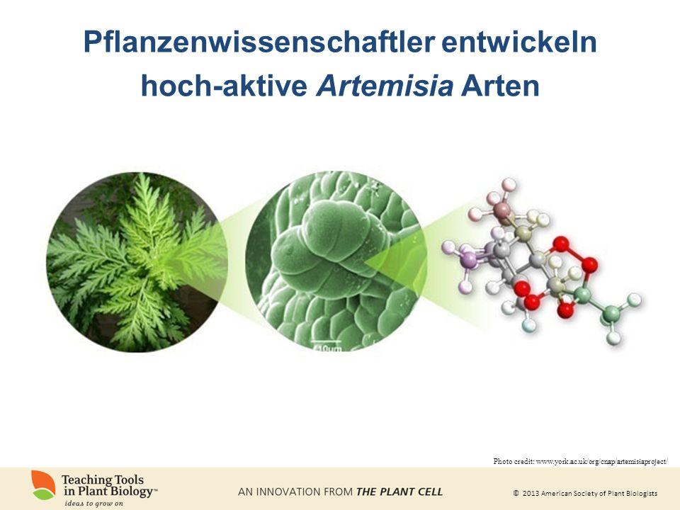 Pflanzenwissenschaftler entwickeln hoch-aktive Artemisia Arten