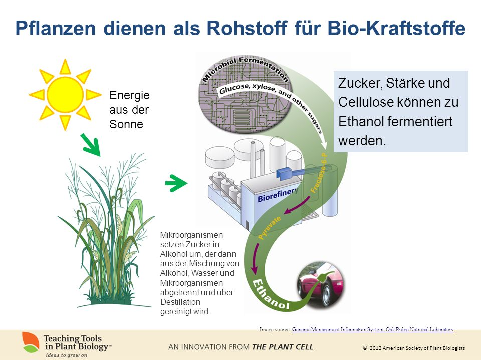 Pflanzen dienen als Rohstoff für Bio-Kraftstoffe