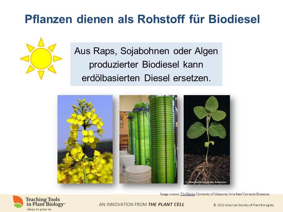 Pflanzen dienen als Rohstoff für Biodiesel
