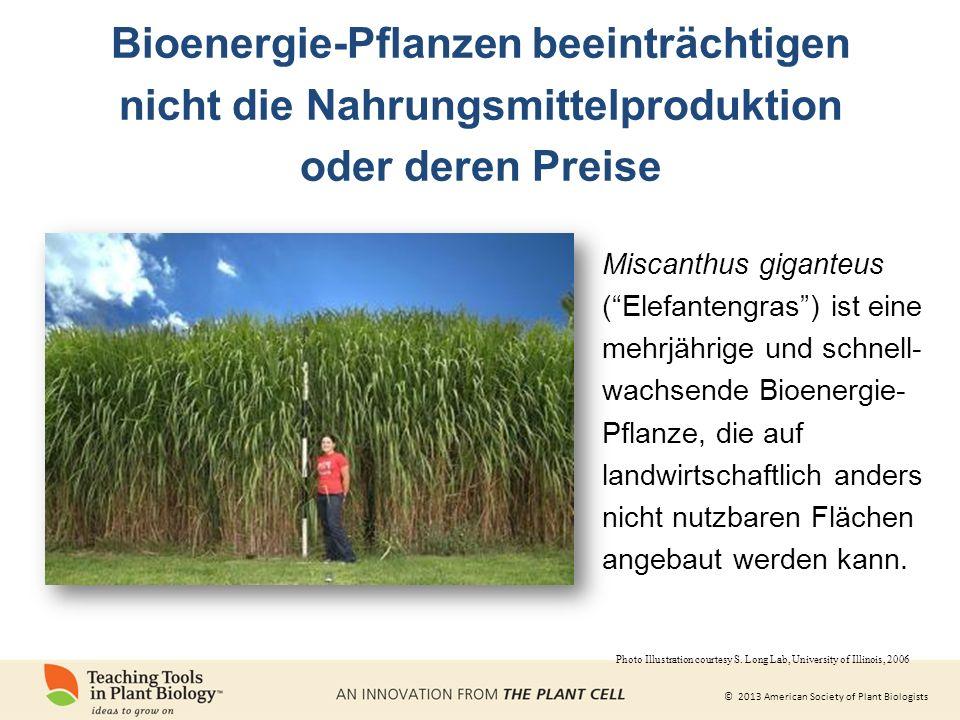 Bioenergie-Pflanzen beeinträchtigen nicht die Nahrungsmittelproduktion
