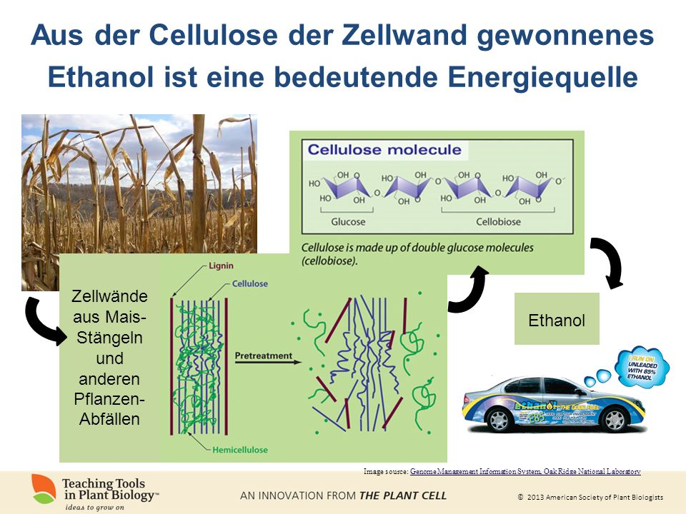 Aus der Cellulose der Zellwand gewonnenes