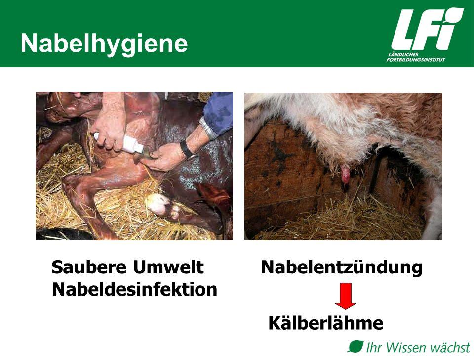 Nabelhygiene Saubere Umwelt Nabeldesinfektion Nabelentzündung