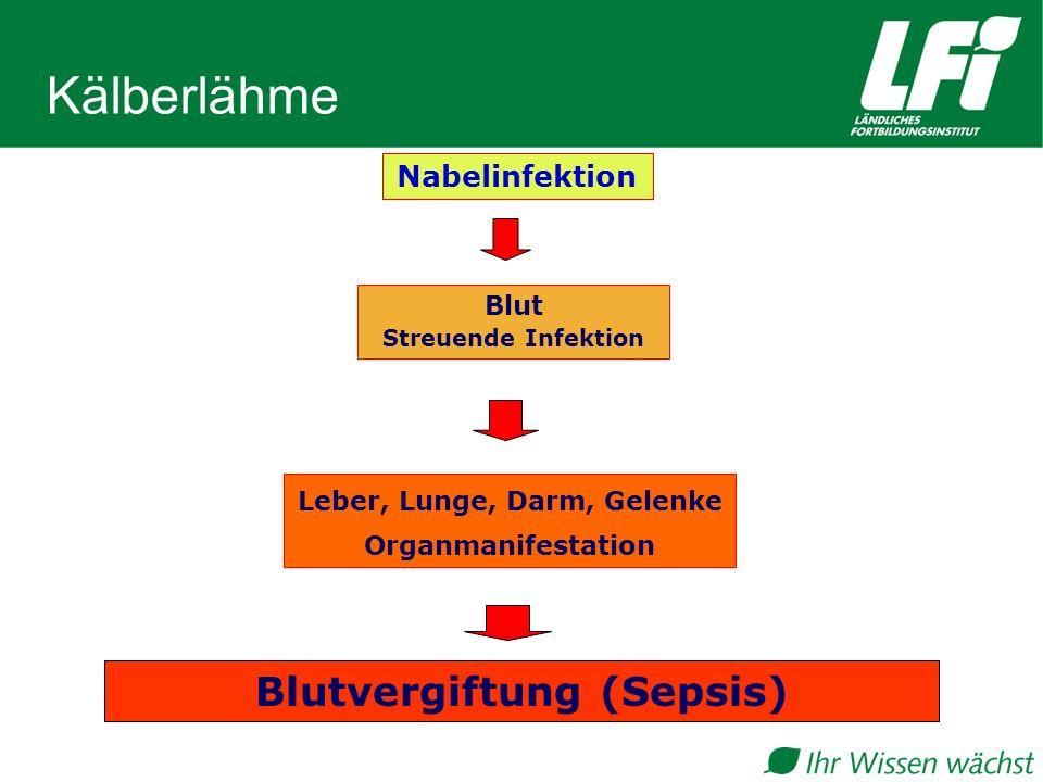 Leber, Lunge, Darm, Gelenke Blutvergiftung (Sepsis)