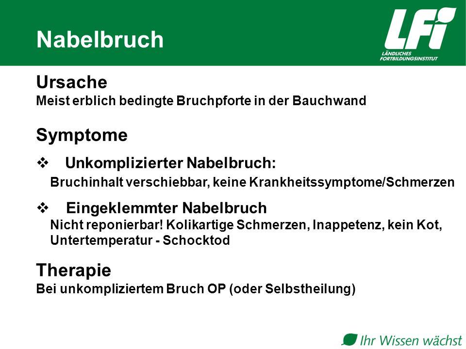 Nabelbruch Ursache Symptome Therapie Unkomplizierter Nabelbruch: