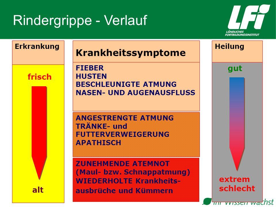 Rindergrippe - Verlauf
