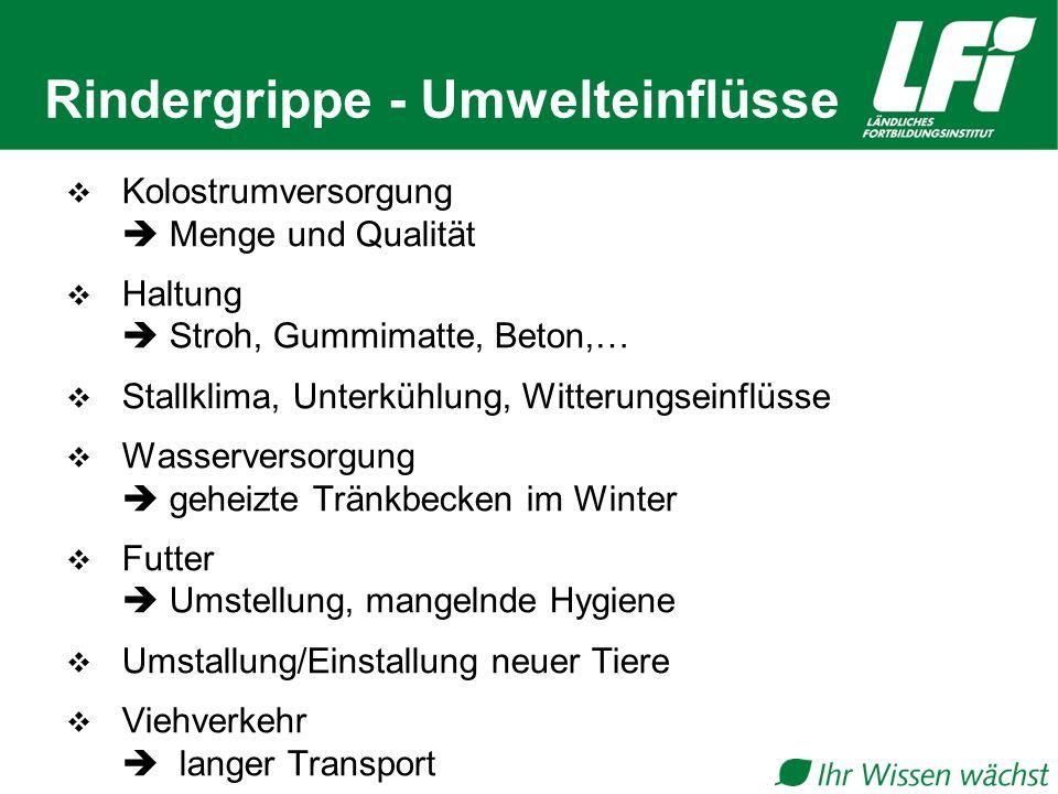 Rindergrippe - Umwelteinflüsse