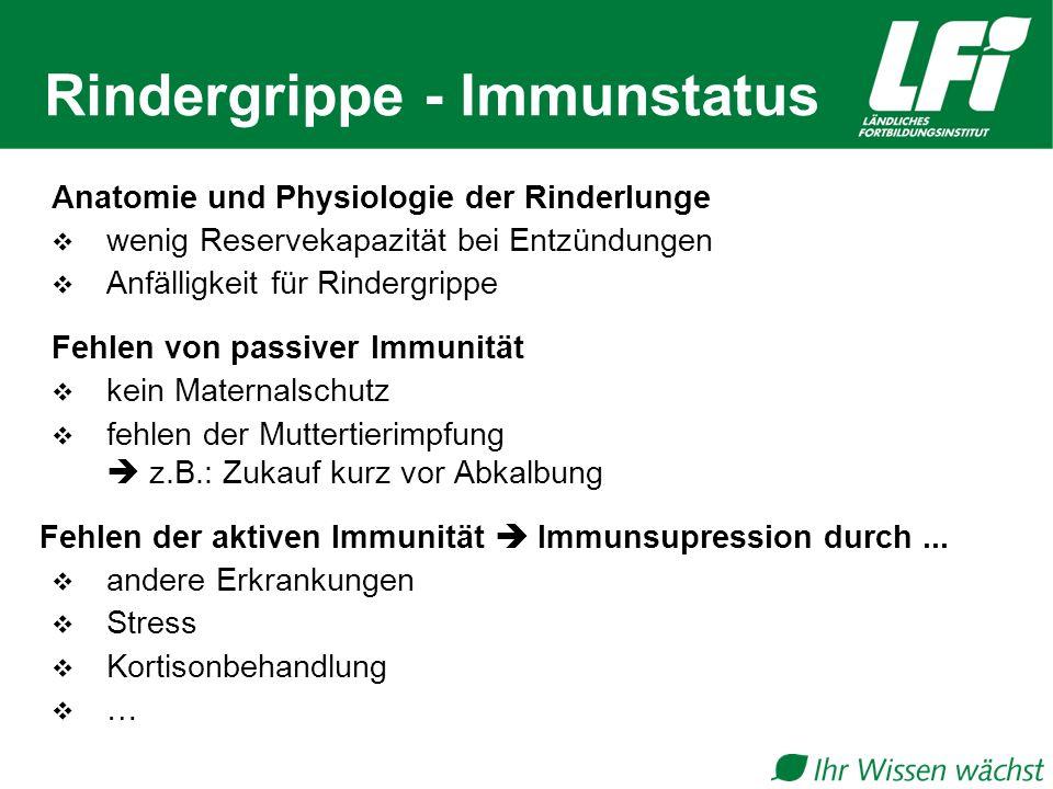 Rindergrippe - Immunstatus
