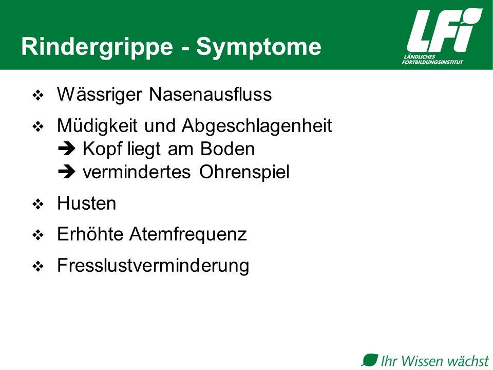 Rindergrippe - Symptome