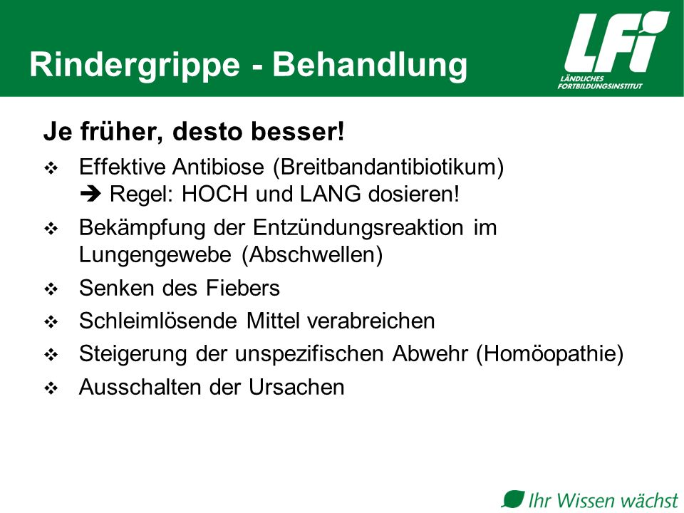 Rindergrippe - Behandlung