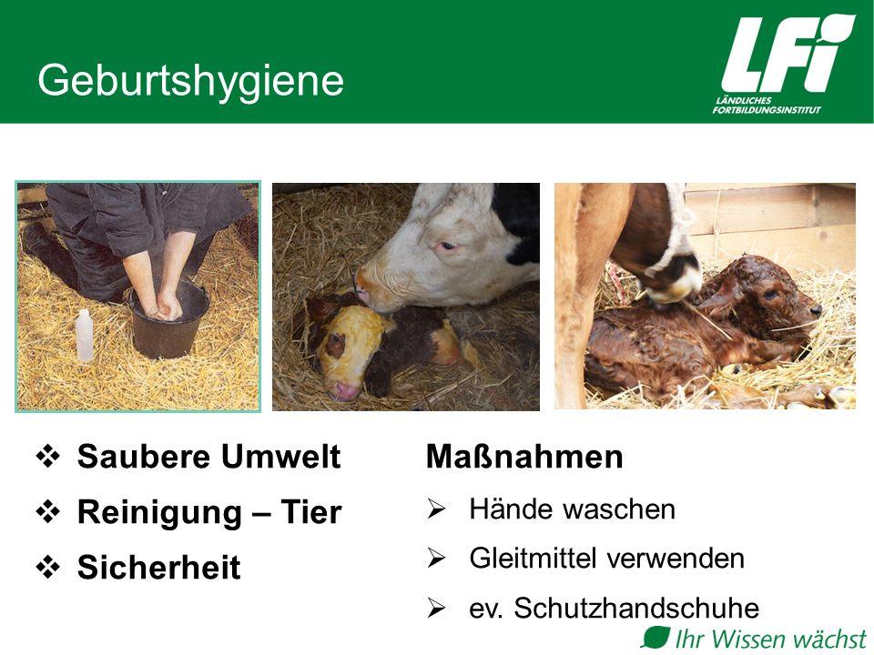 Geburtshygiene Saubere Umwelt Reinigung – Tier Sicherheit Maßnahmen