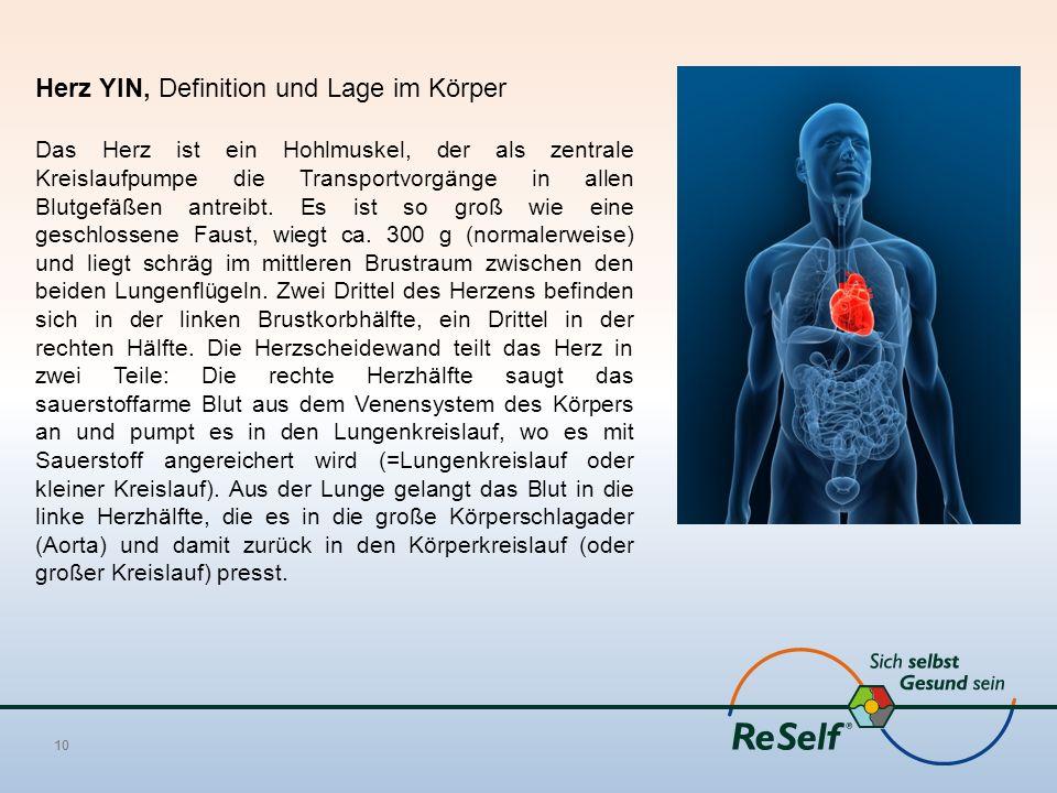 Herz YIN, Definition und Lage im Körper