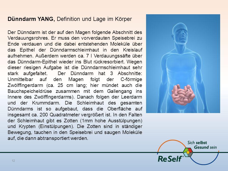 Dünndarm YANG, Definition und Lage im Körper