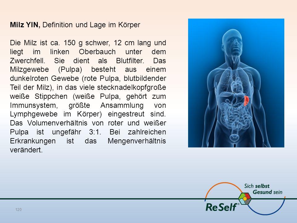 Milz YIN, Definition und Lage im Körper