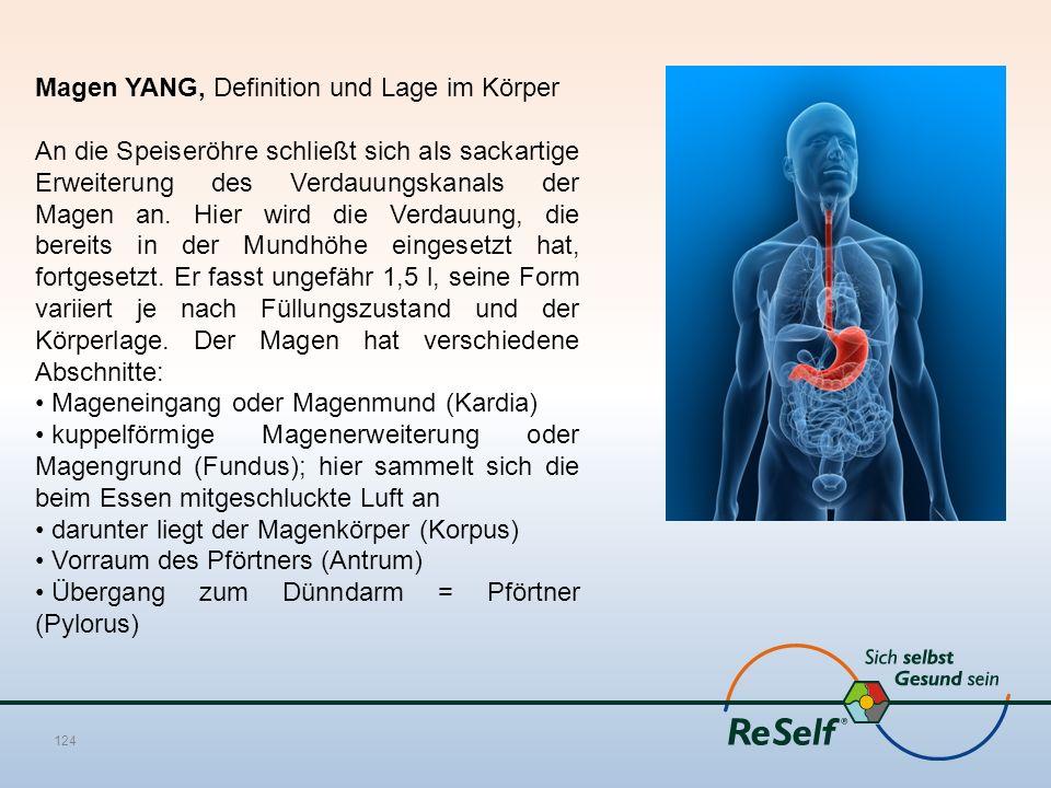 Magen YANG, Definition und Lage im Körper