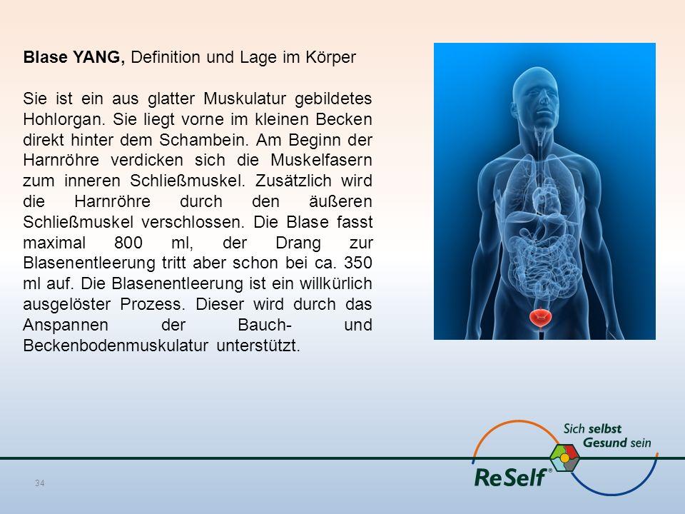 Blase YANG, Definition und Lage im Körper