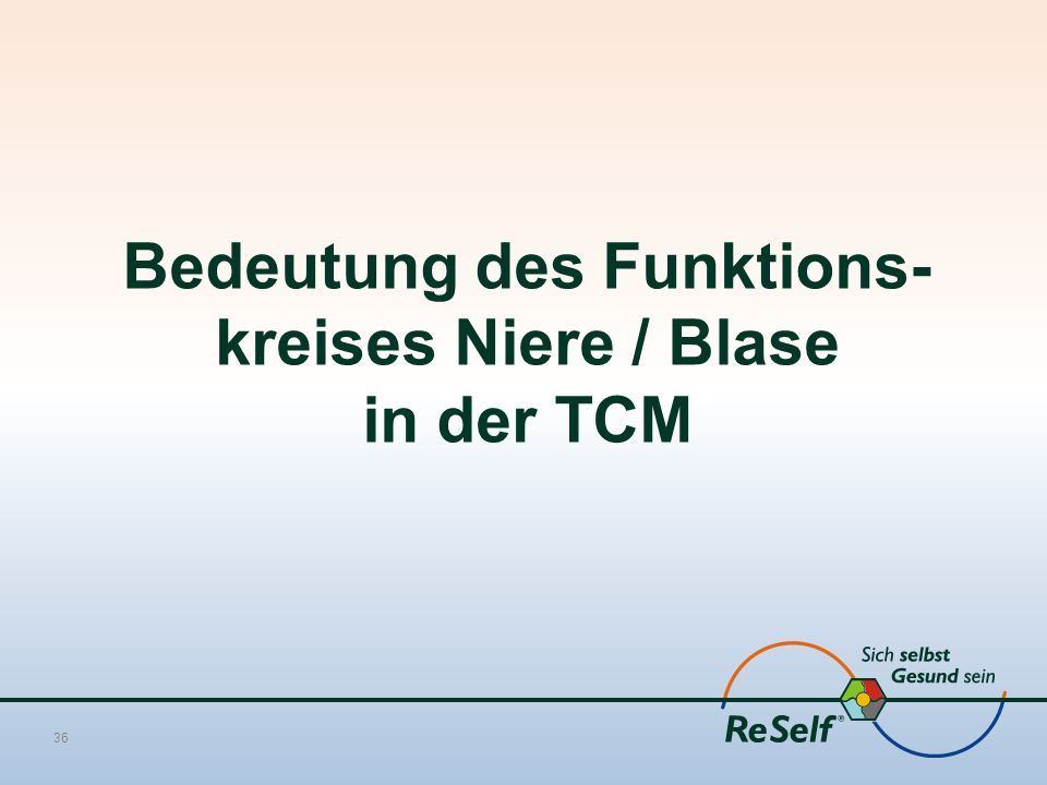 Bedeutung des Funktions-kreises Niere / Blase