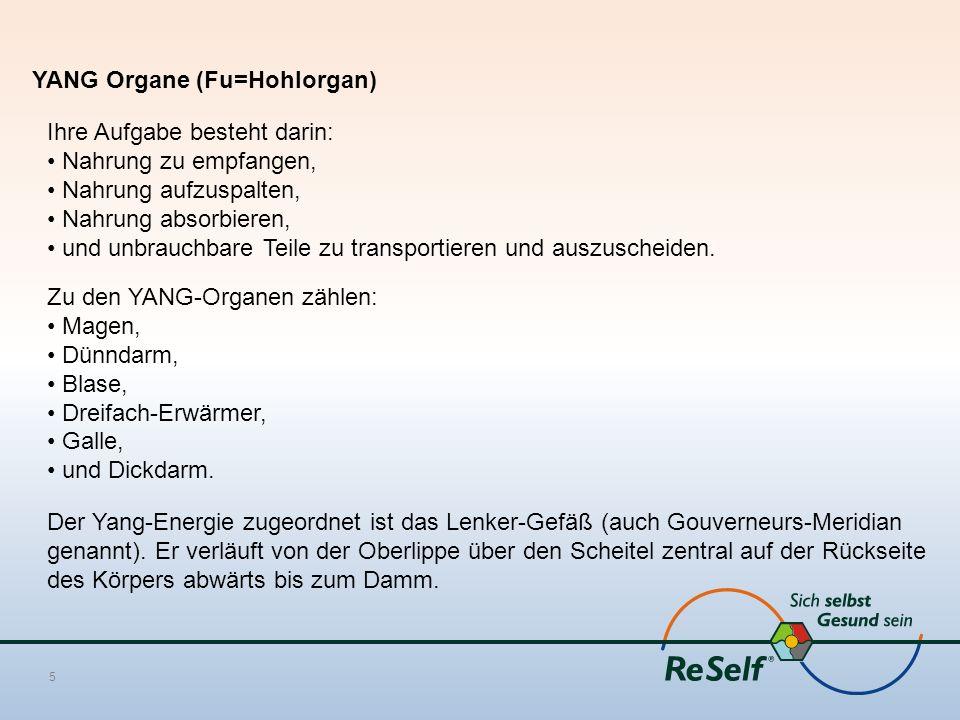 Niedlich Die Funktion Der Gallenblase Bilder - Menschliche Anatomie ...